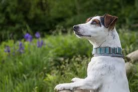 daisy the dog